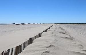 Gulf Coast Project Wins National Beach Restoration Award